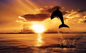 Delfiinidega päikeseloojangFoto: hdwallpaperstop.com