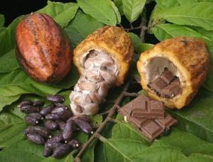 KakaoFoto: Wordvein