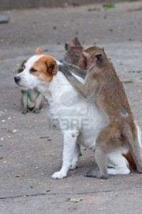 Abivalmis ahvid koeral kirpe ja puuke otsimasFoto: 123 rf