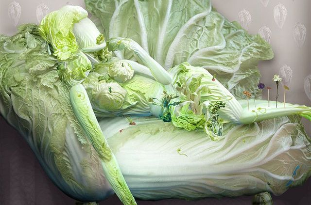 chinese_cabbage_artwork_640_10