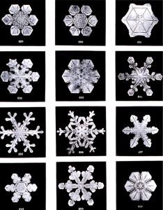 Oled lumehelbeke Foto: Wikimedia