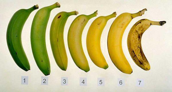 Banaani seitse küpsusastet Foto: Vegans Go Raw