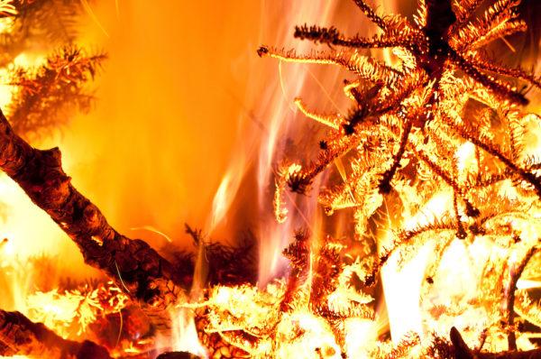 Foto: brendanmcgarry.photoshelter.com