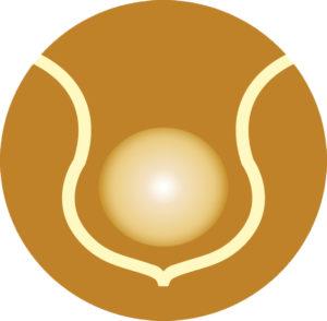 Soul Body Fusion®'i logo
