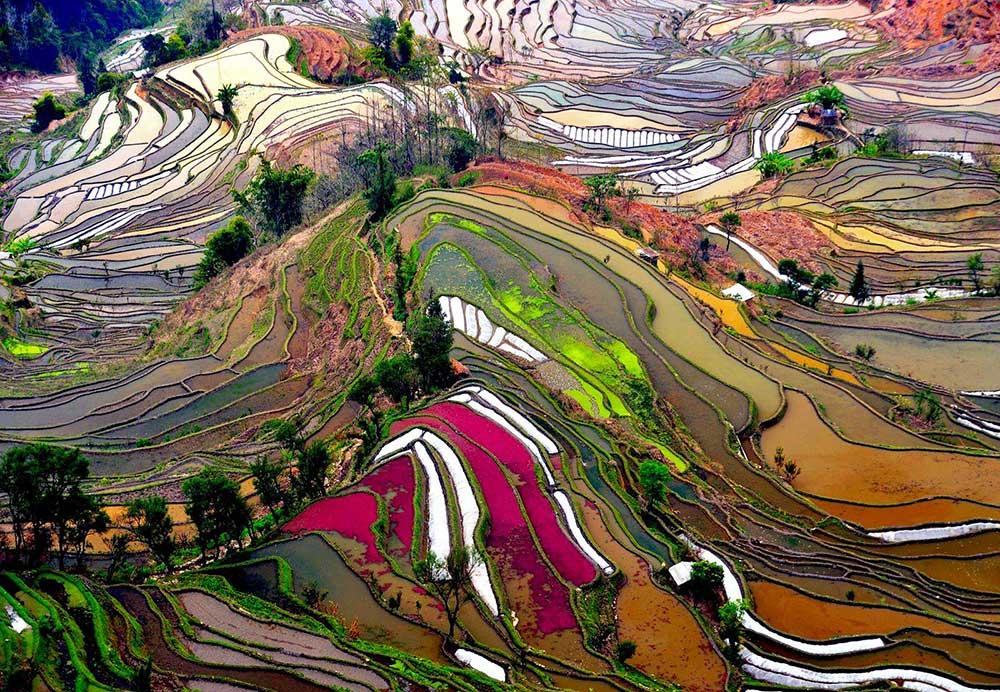 Riisipõllud Hiinas Foto: National Geographic
